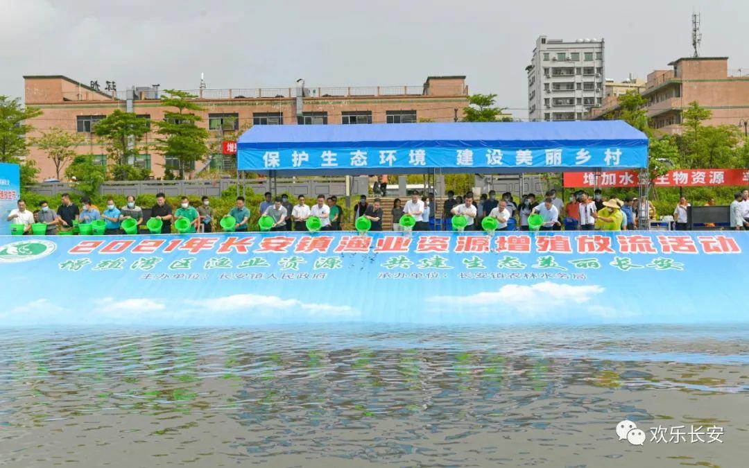 """长安""""休渔放生节""""举行,9万多尾鱼苗在茅洲河安家"""